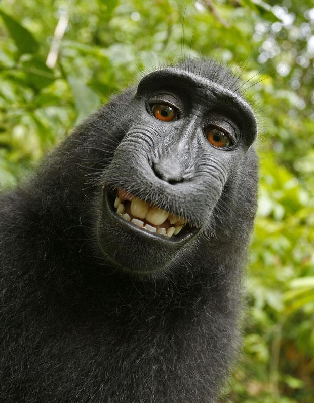 Lista de fotos de animais sorrindo