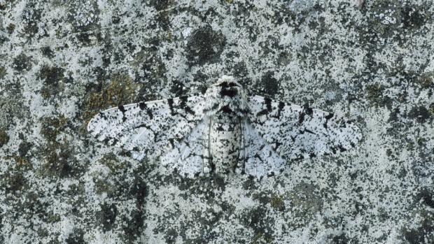 Foto/imagem de animal camuflado