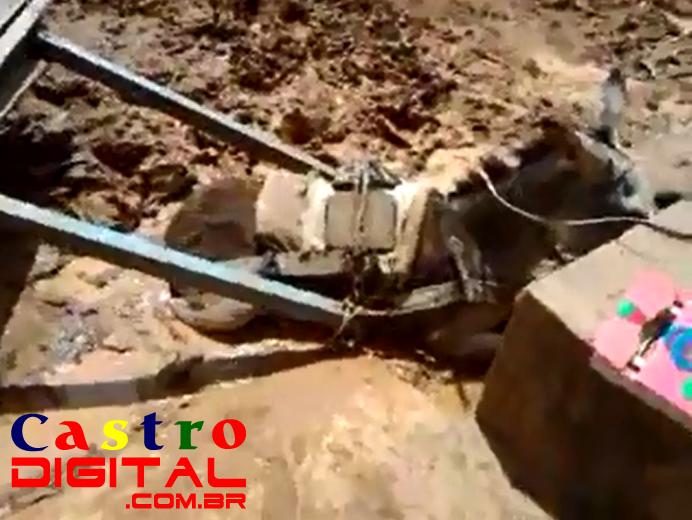 Vídeo de jumenta com carroça atoladas em rua da Trizidela de Bacabal – MA