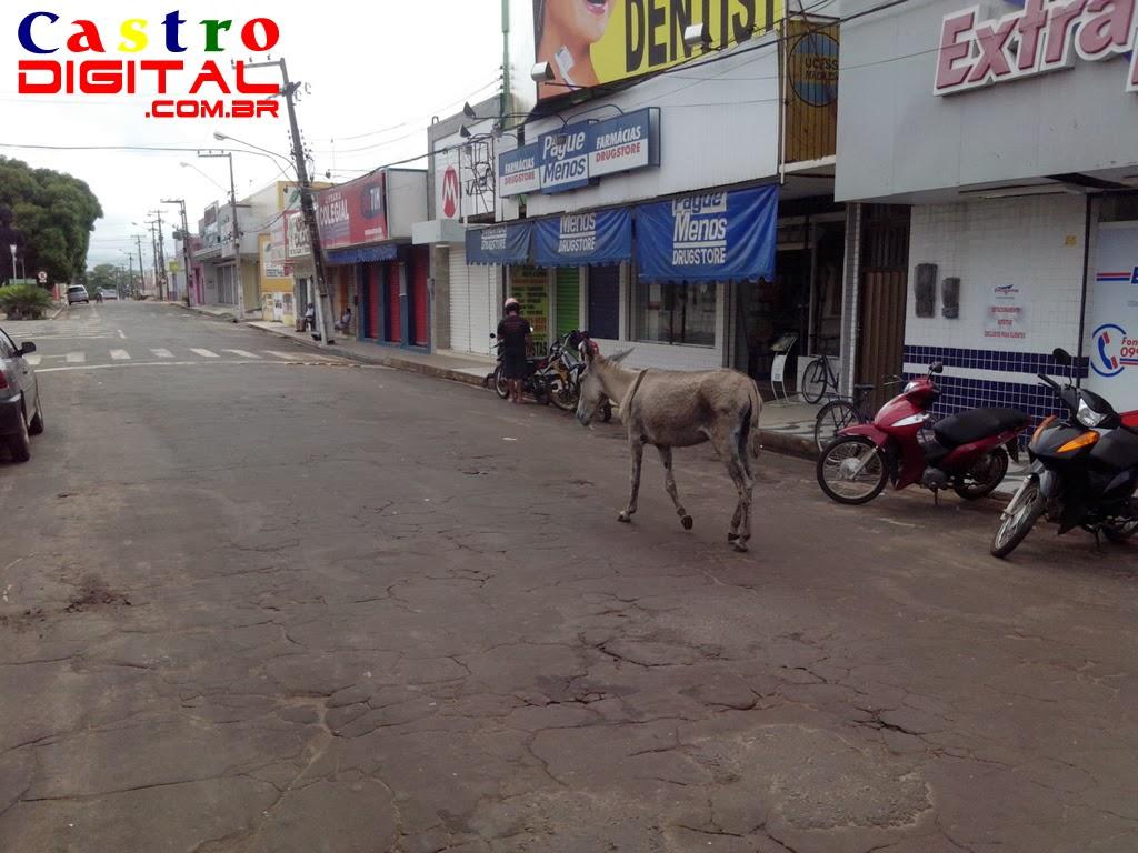 Flagra em Bacabal: fotos de jumento passeando no centro da cidade