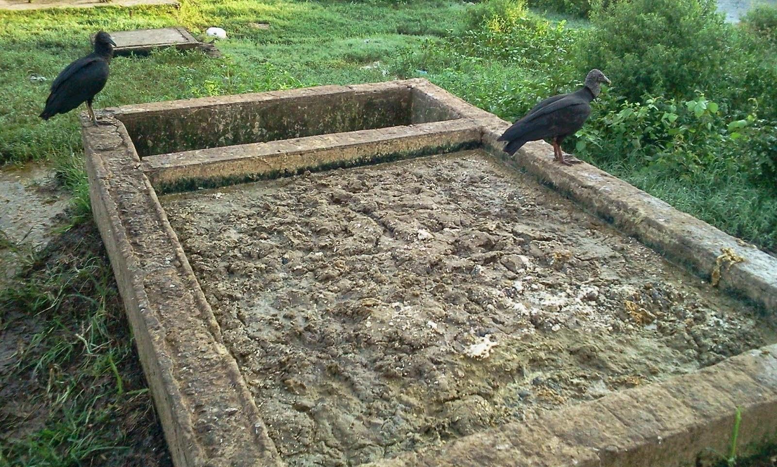 Nojeira no matadouro de Bacabal causa interdição e a cidade fica sem carne bovina